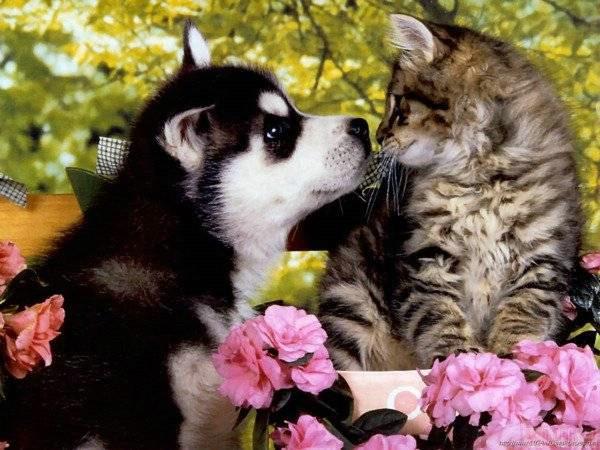 Puppy And Kitten Socialization